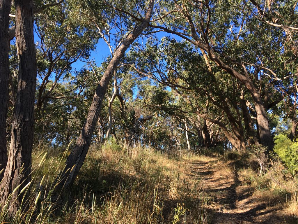 Willunga Hill Trail