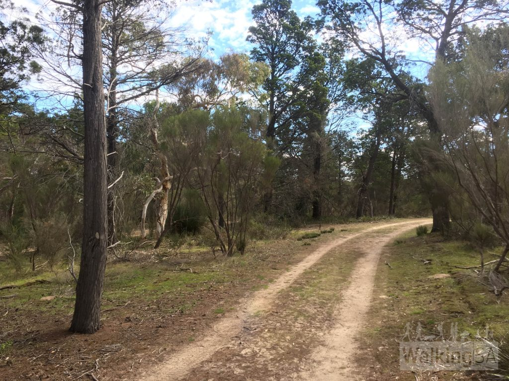 The Boundary Walk follows this wide firetrack around the perimeter of Sandy Creek Conservation Park