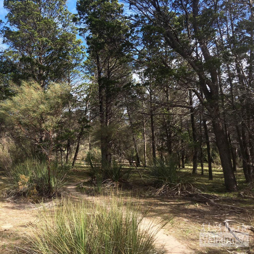 The Wren Walk passes through some of the last remaining woodlands in the Barossa Valley