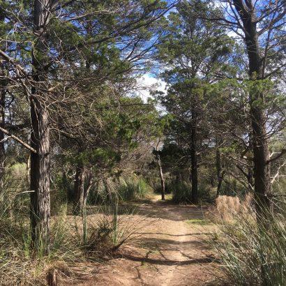 Wren Walk