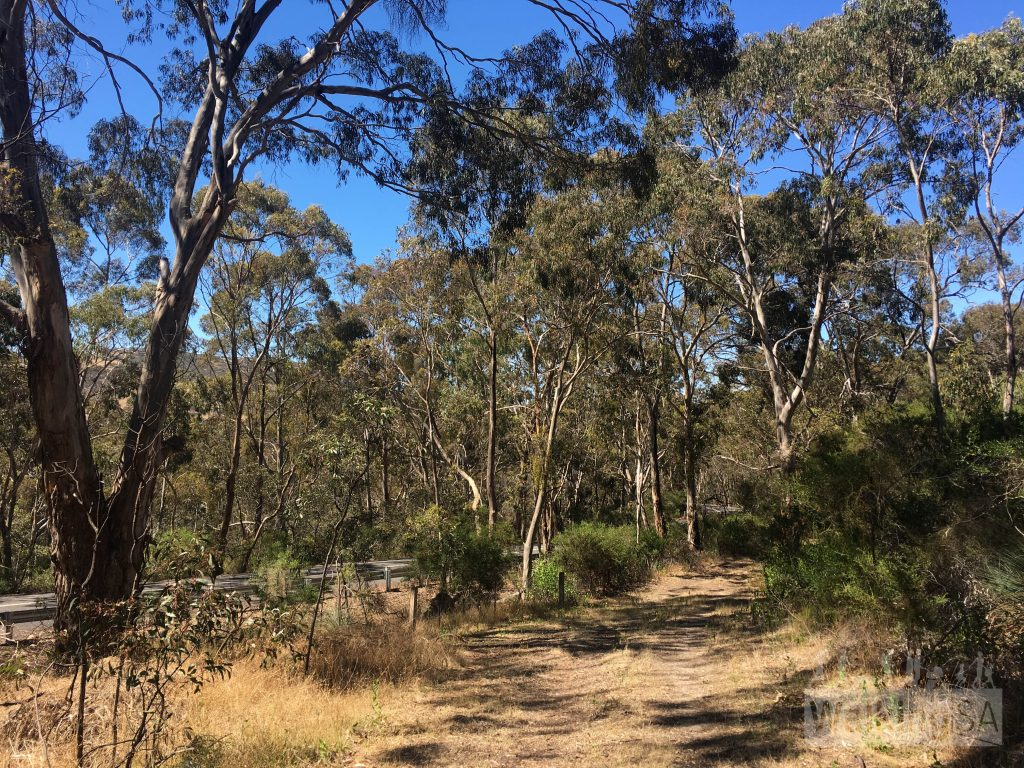 A section of the Mt Billy Hike follows the paralell to the main bitumen road, but it is pleasant enough still