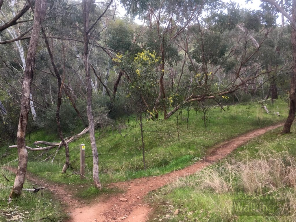 At first the Magpie Creek Trails seem confusing, but actually it is a series of mostly parallel trails that get you to the same place