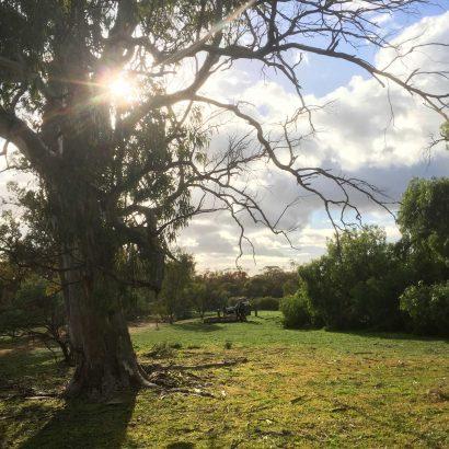 Echidna Loop, Willowie Forest