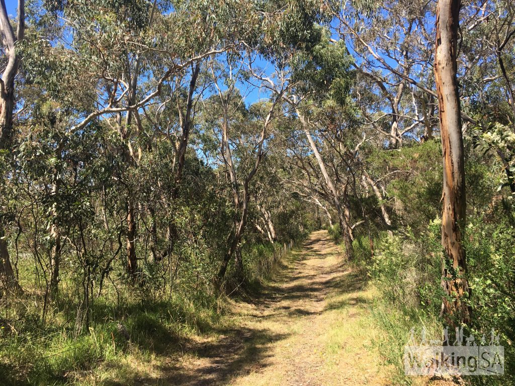 Following the grassy fire track of the Mt Billy Hike which is paralell to the main bitumen road