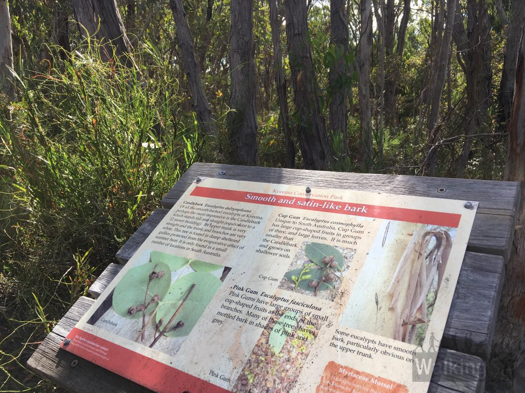 Interpretive signs are along sections of the Myrtaceae Hike