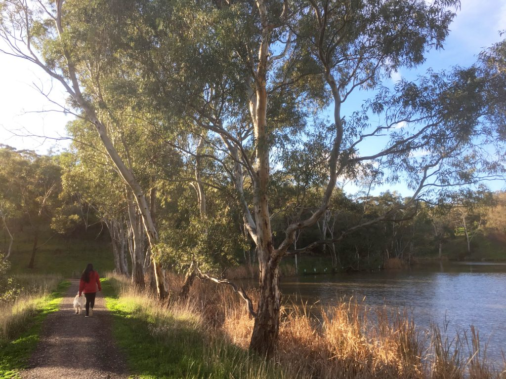 News From Walking Sa South Australia S Peak Walking Body Images, Photos, Reviews