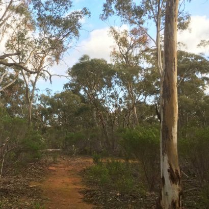 Monitor Loop, Willowie Forest
