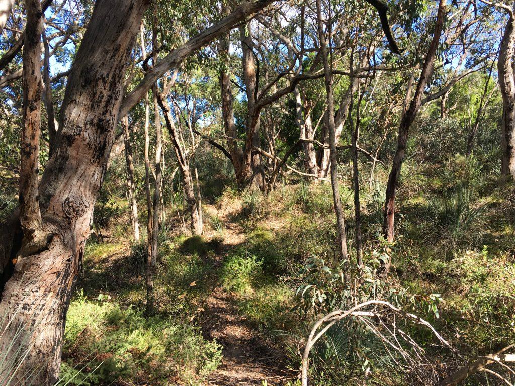 Mulurus Hike, Kyeema Conservation Park