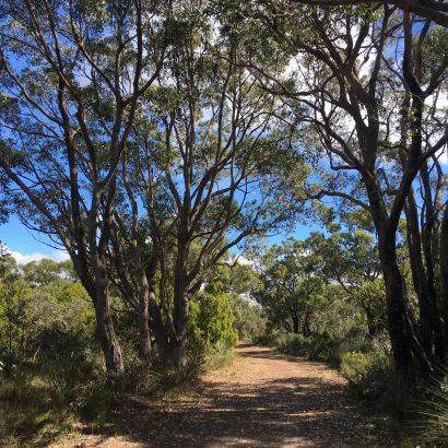 Myrtaceae Hike, Kyeema Conservation Park