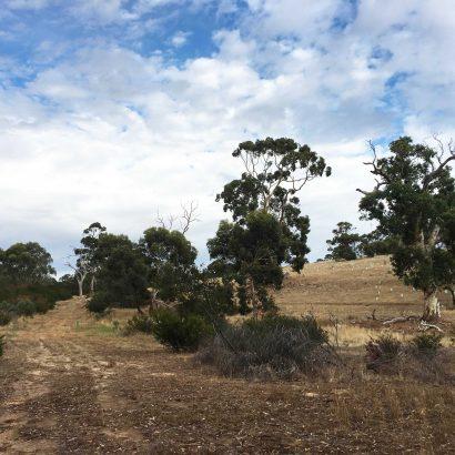 Native Grasses Hike, Bullock Hill Conservation Park