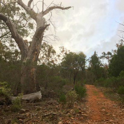 Possum Loop, Willowie Forest