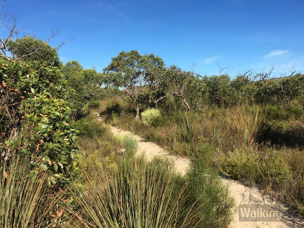 Some of the walking trails and fire tracks on the Stringybark Hike and Emu Wren Hike are quite sandy