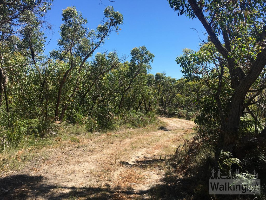 The Banksia Hike follows some sandy fire tracks
