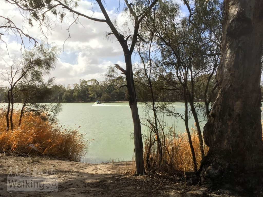 The Border Cliffs Customs House Walking Trail follows some of the Murray before exploring the wetlands and lagoons