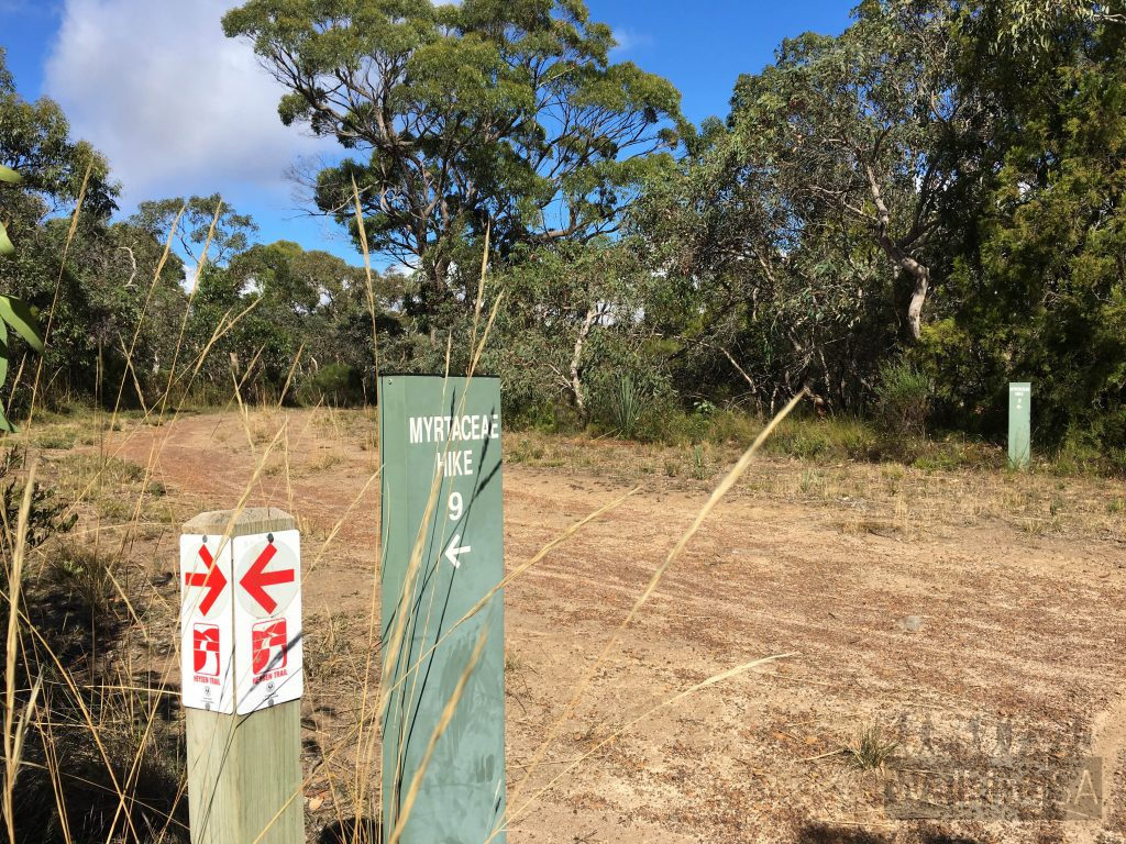 The Myrtaceae Hike is marked at some trail junctions