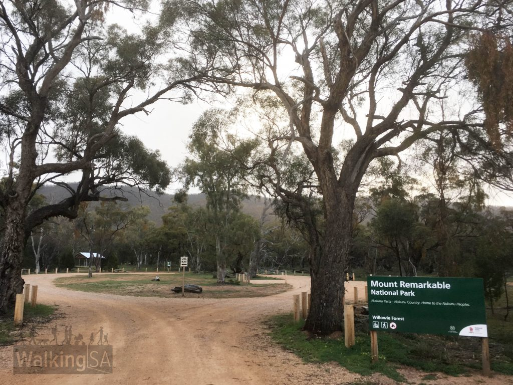 The Willowie Forest trailhead with carpark and picnic area is 7.7km north of Melrose, towards Wilmington