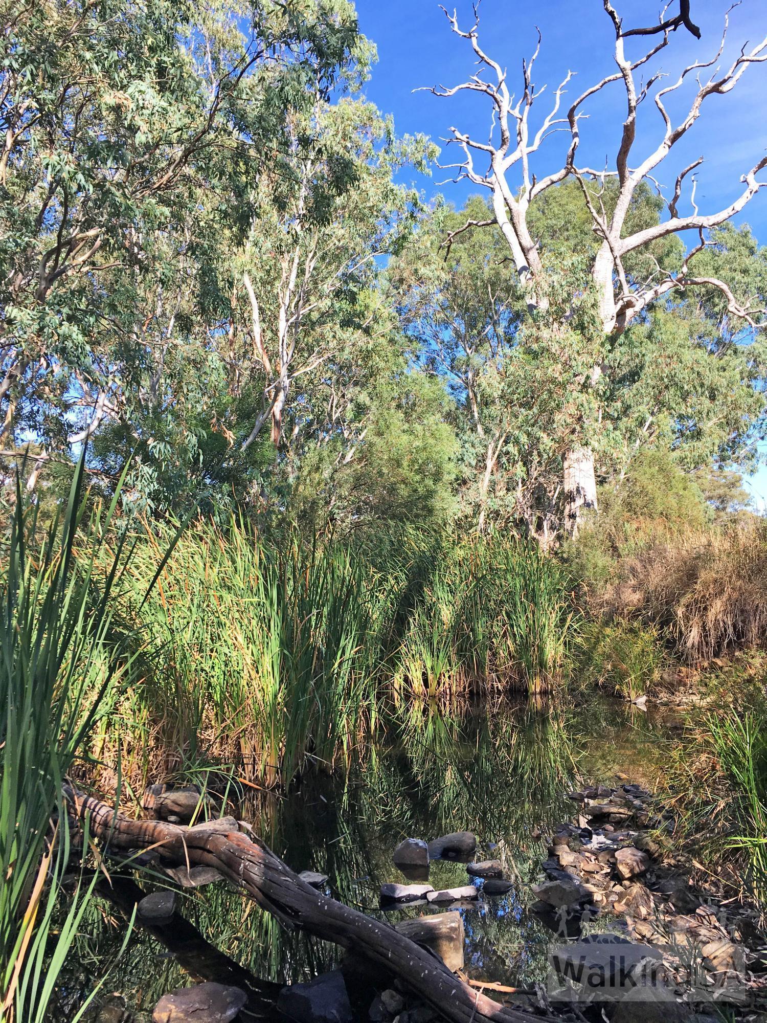 Emu Wren Hike | Cox Scrub Conservation Park | Walking SA