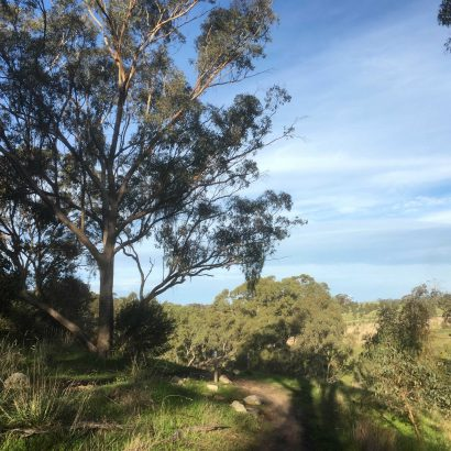 Walking Loop in Craigburn Farm
