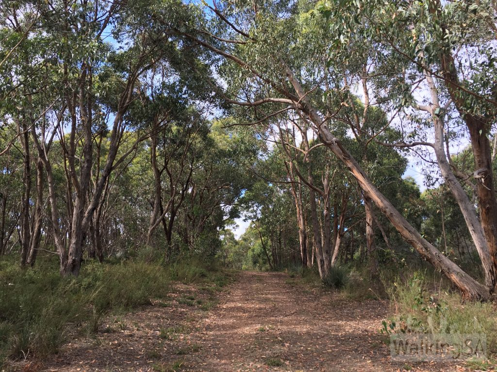 Walking along one of the fire tracks on the Myrtaceae Hike in Kyeema Conservation Park