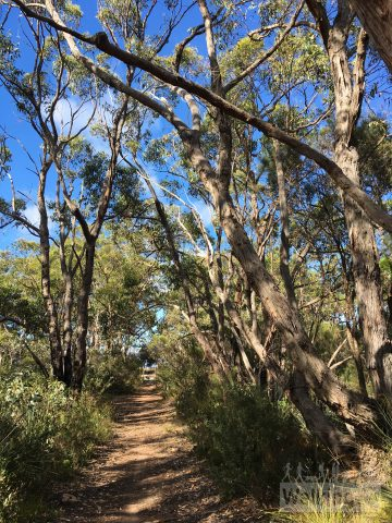 Walking along the Heysen Trail on the Mulurus Hike in Kyeema Conservation Park