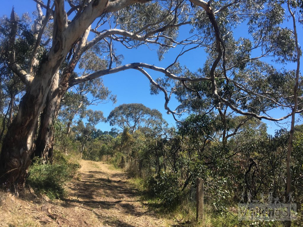 Walking on the Banksia Hike in Mt Billy Conservation Park