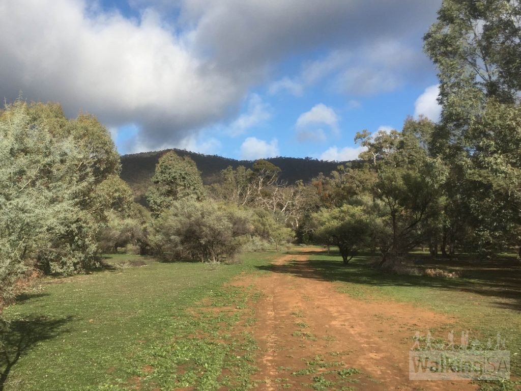 Walking on the Echidna Loop through old farming land