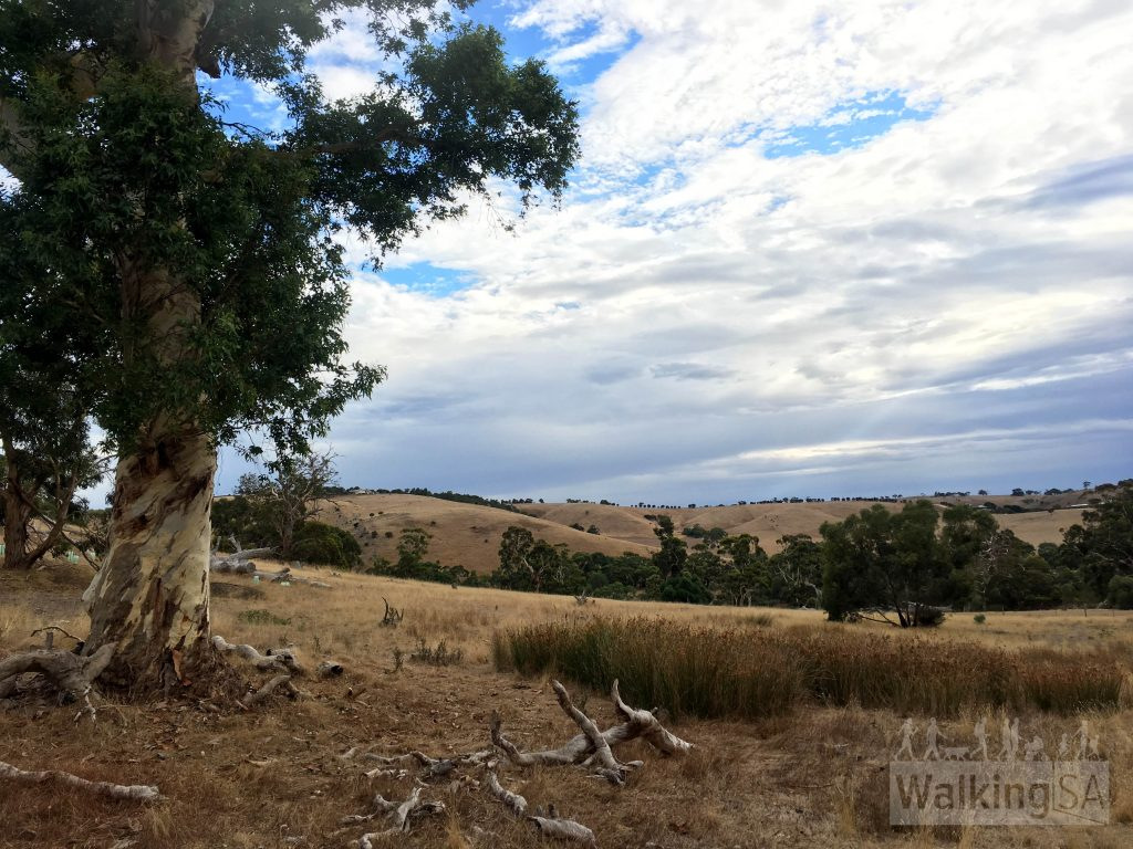 Walking on the Eucalypt Hike through the open grassland areas