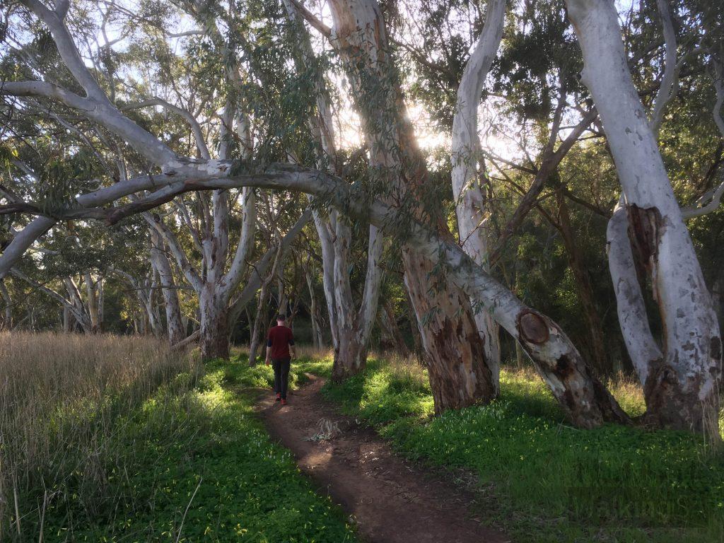 Walking on the Little River Trail in Craigburn Farm