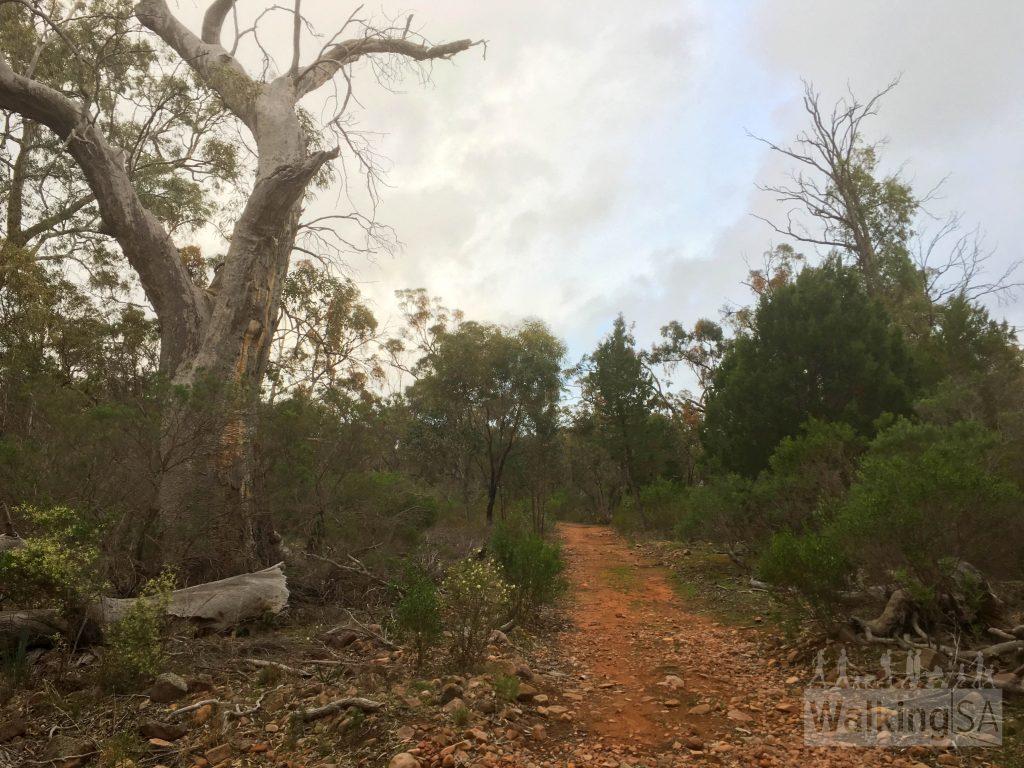 Walking on the Possum Loop and Monitor Loop towards Kookaburra Creek Retreat