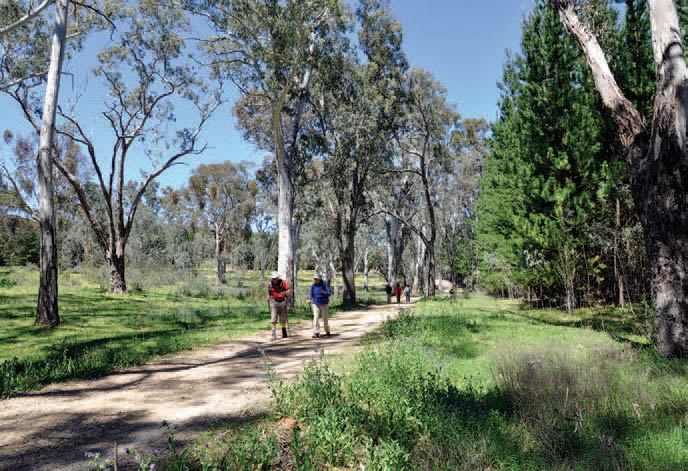 A section of the Old Kersbrook Loop Trail, north of checkpoint OK 02