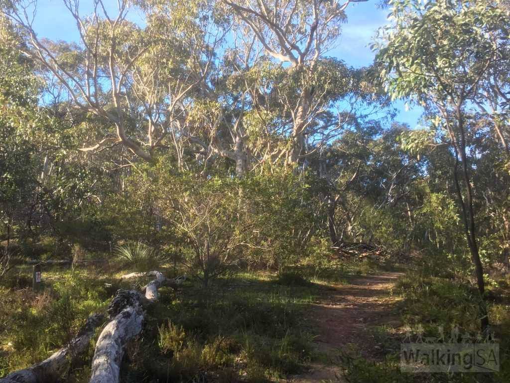 Following the Heysen Trail to the top of Mt Magnificient