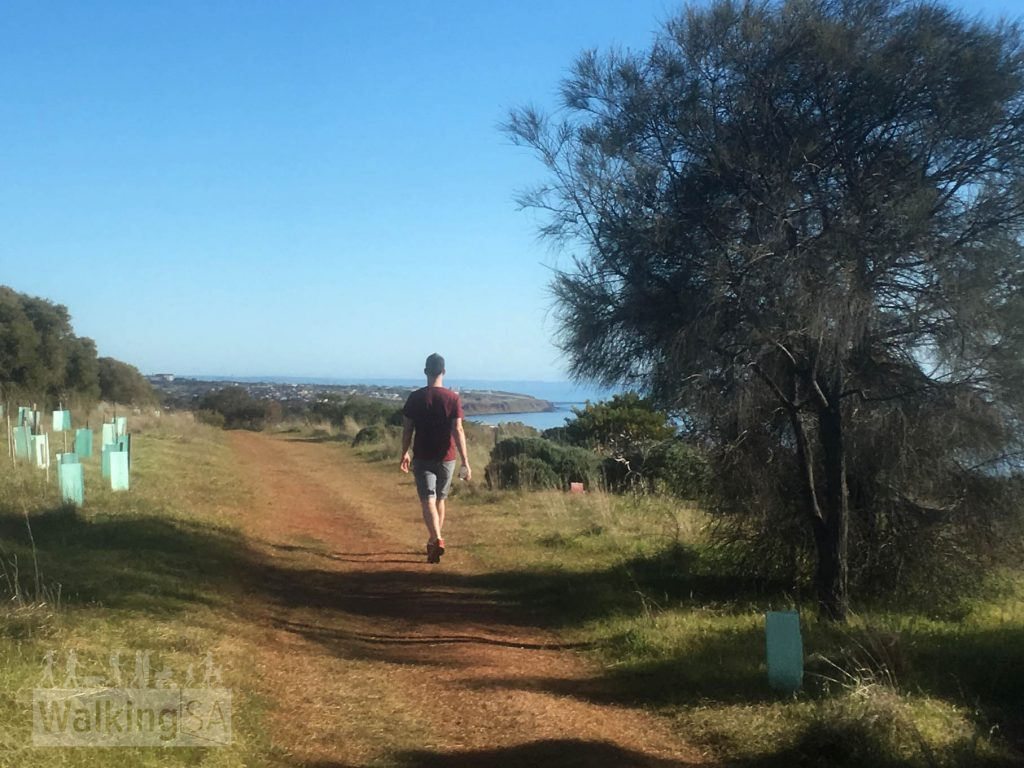 Marino Conservation Park contains remnant coastal heath, which the Friends of Marino Conservation Park are working to preserve