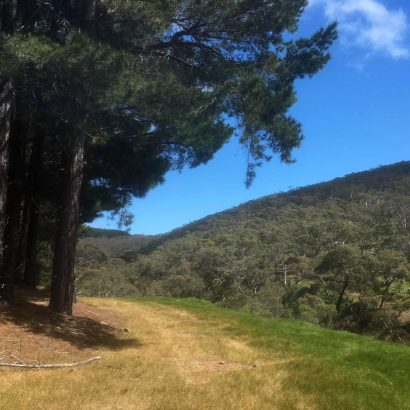 Mount Hayfield Hike (Second Valley Forest)