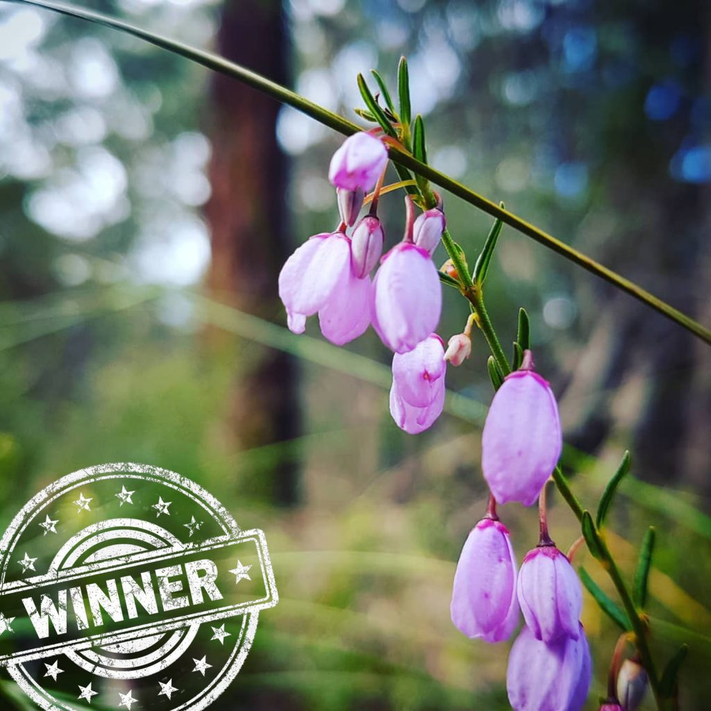 Instragram user scubacoops has won this week's wildflower walk photo competition with her photo of wildflowers seen in Kuitpo Forest.