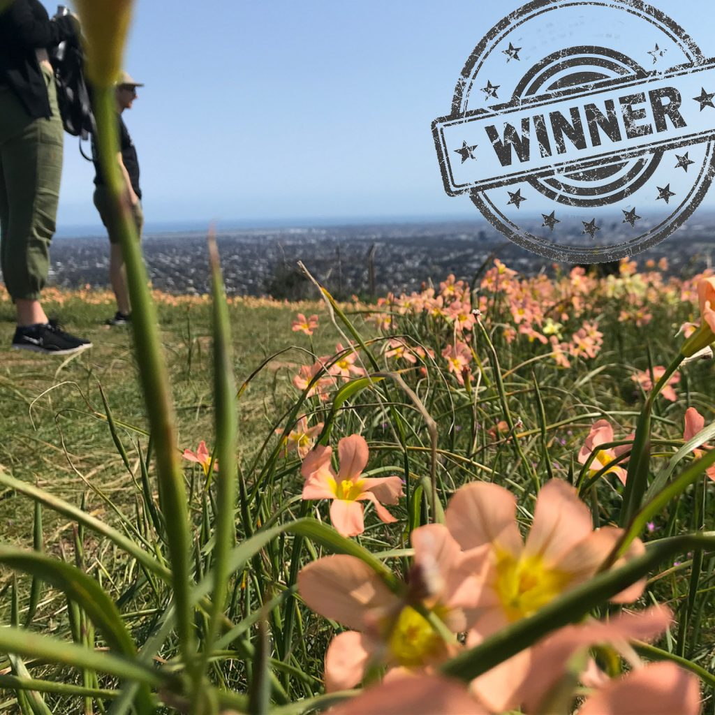 Instagram user Illy has won this week's wildflower walk photo competition with her photo of wildflowers seen on the one of the Beaumont Circuit hikes, part of the Burnside Walks network.