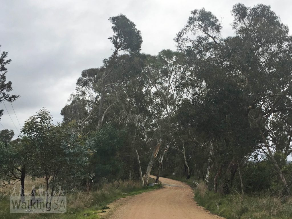 The Morgan Loop Trail follows quiet country lanes (dirt roads) and tracks through the area north of the town of Kersbrook, with good views over surrounding farmland.