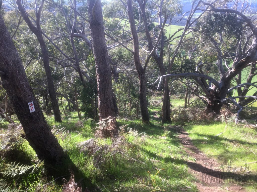 The climb up the summit along the road reserve from Mt Magnificient Rd is steep but short