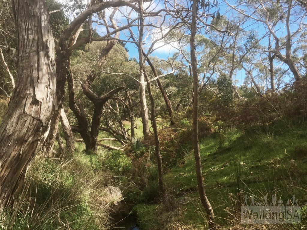 The hike includes some native scrub and some pine forest