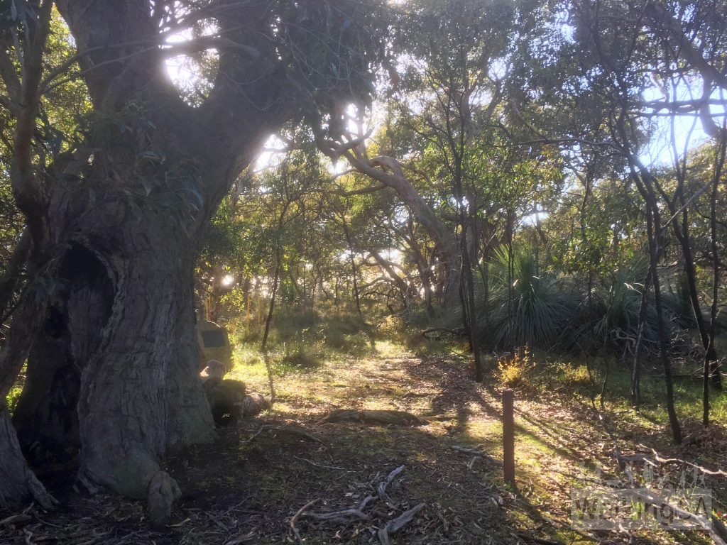 The plaque in Nixon-Skinner Conservation Park is near this distinctive tree, about 300m in from Gate 1