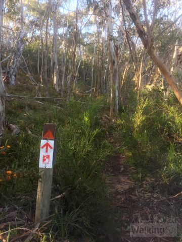 The trail is well marked - but note the section along Mt Magnificient Road has no formal trail