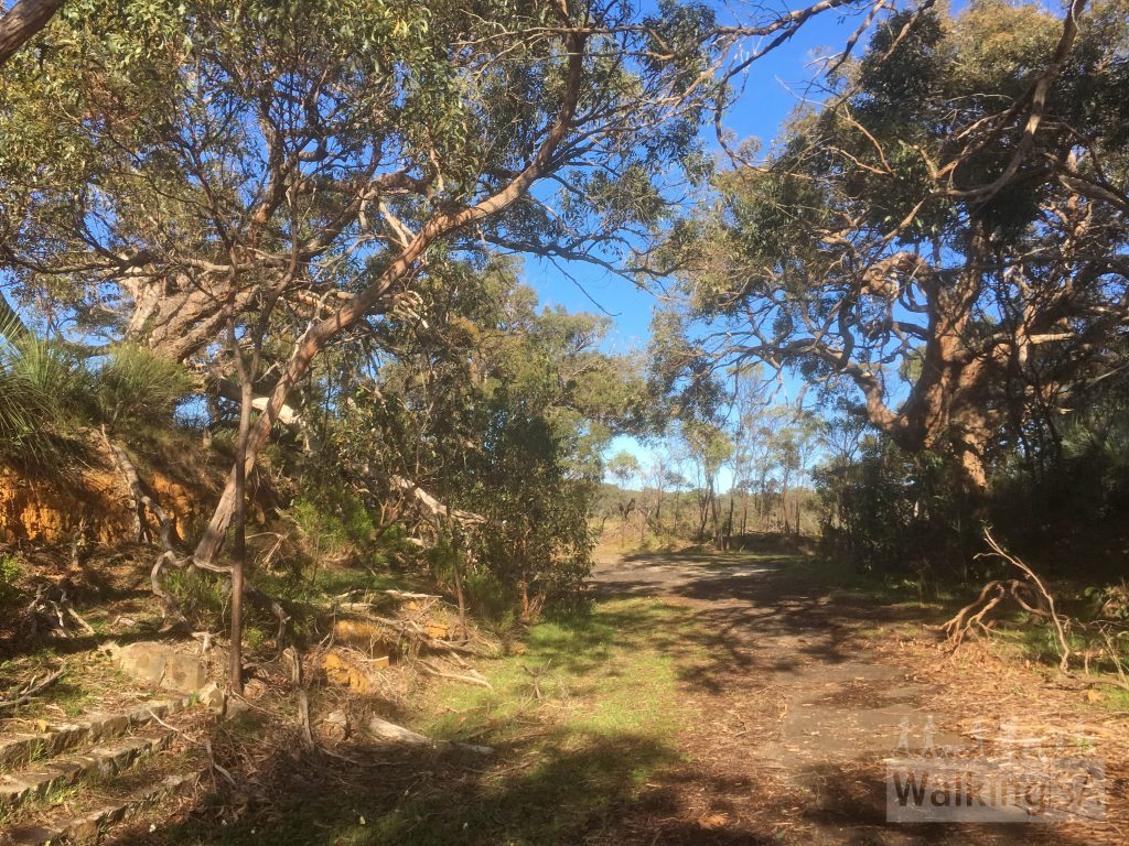 The walk in Nixon-Skinner Conservation Park follows an old road out to the reservoir