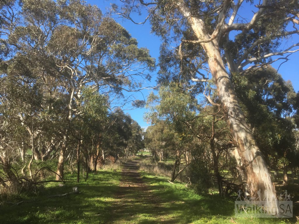 The walking trail in Nixon-Skinner Conservation Park near Myponga follows an old road out to Myponga Reservoir