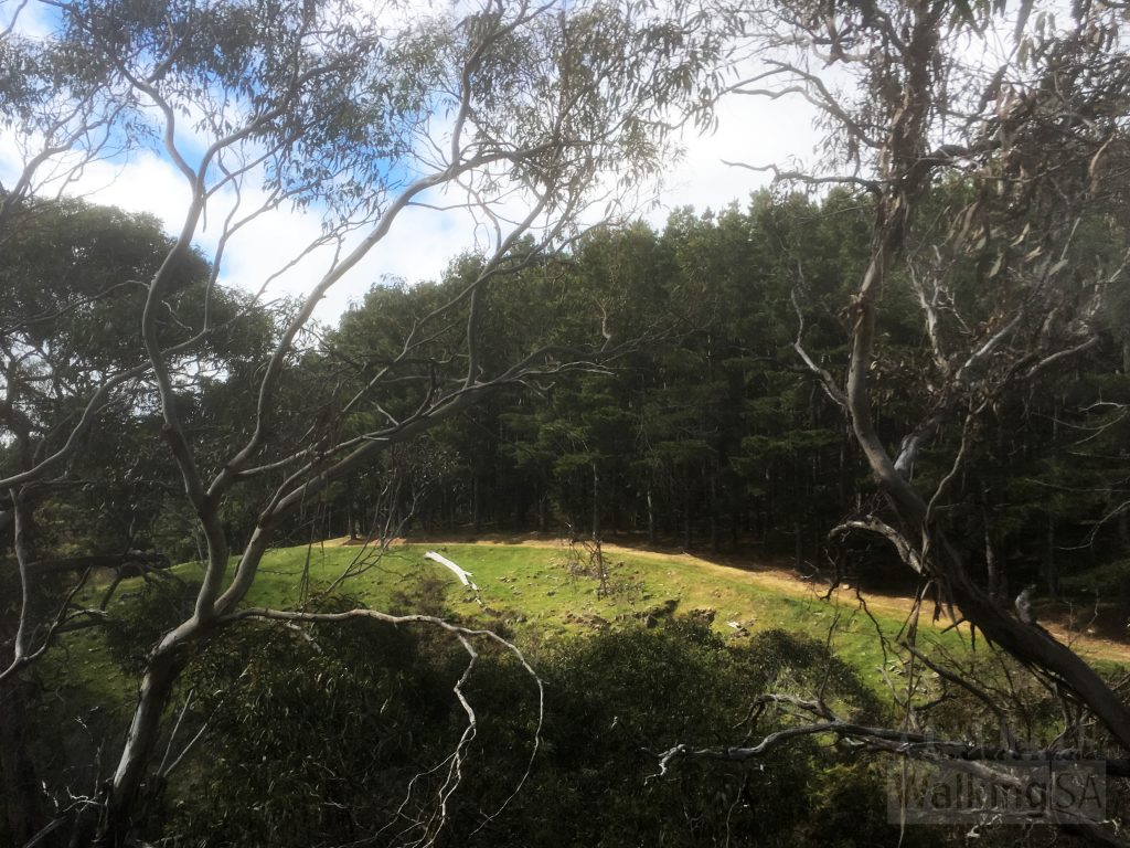 Views from the native scrub to the pine plantation forest