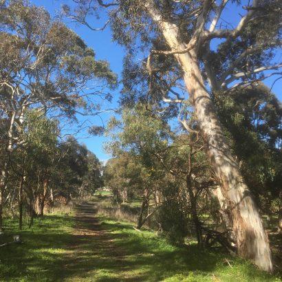 Short walk in Nixon-Skinner Conservation Park