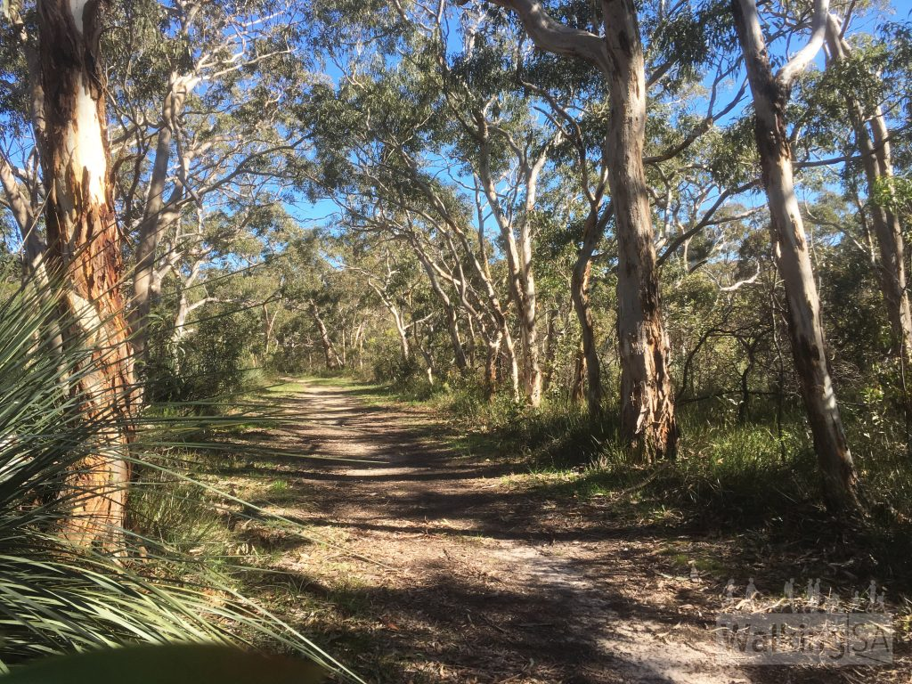 Walking along the forest trail in Scott Conservation Park