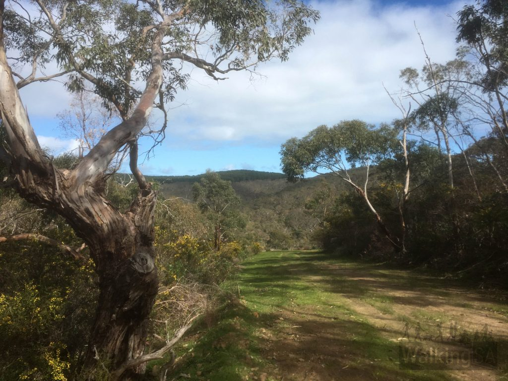 Walking along the northern section of the Mount Hayfield hike