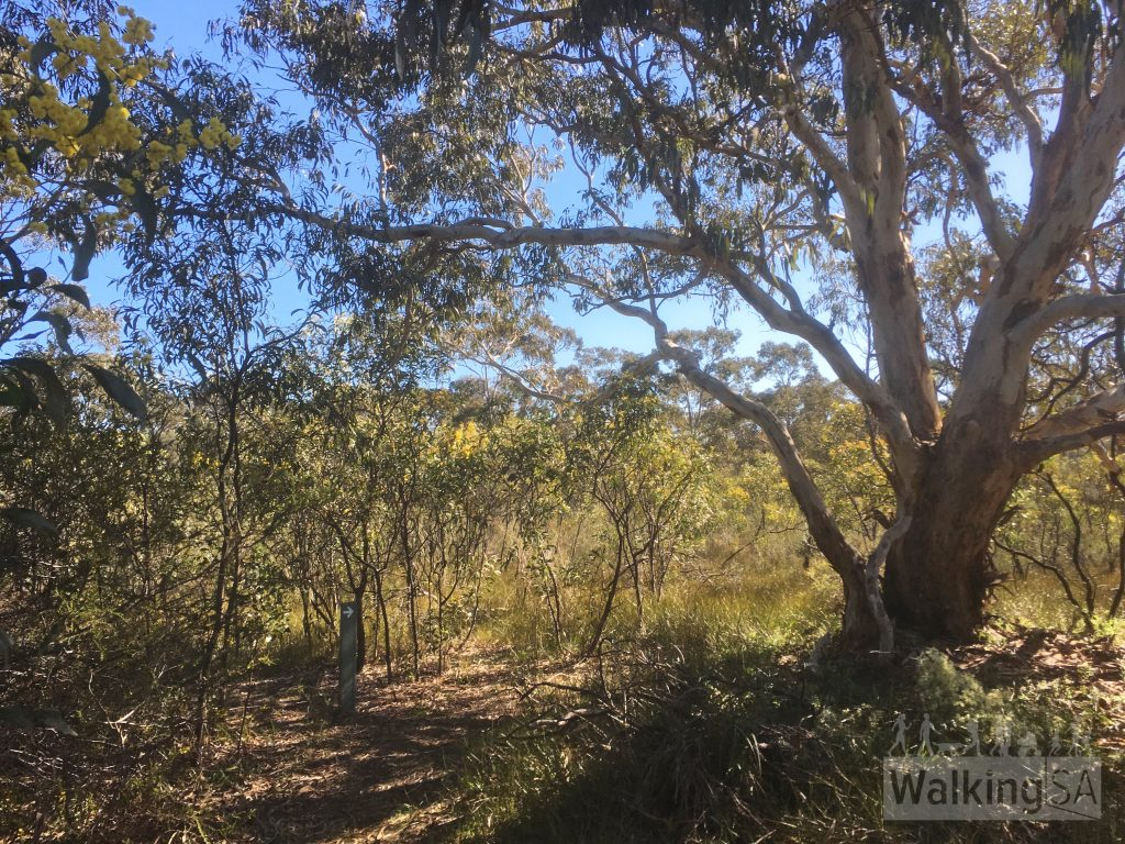 Walking on the Watercourse Hike and Orchid Hike in Scott Conservation Park