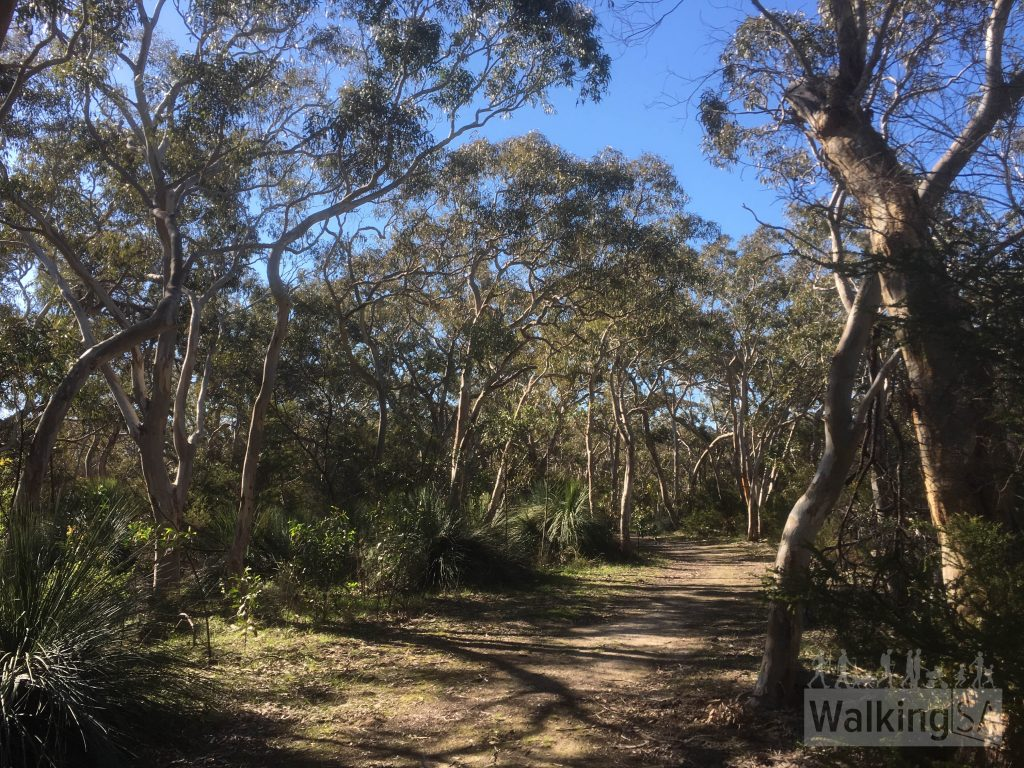 Walking through the forest on the wide fire track in Scott Conservation Park