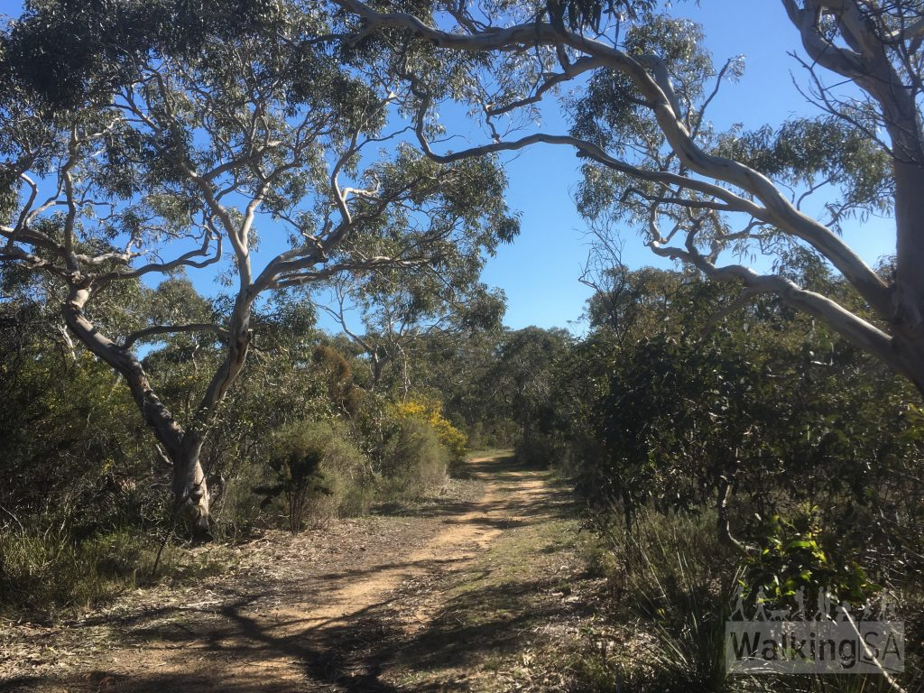 Walking through the scrub on the wide fire track in Scott Conservation Park