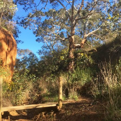 Watercourse Hike, Scott Conservation Park